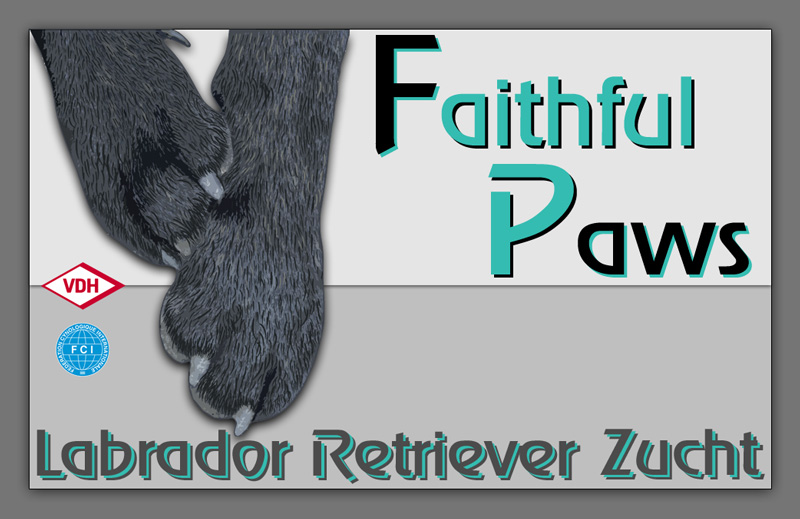 FCI Labrador Retriever Kennel Faithful Paws